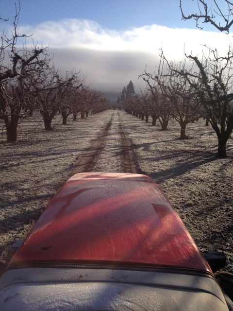 Spreading compost in orchards.