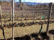 vineyard app